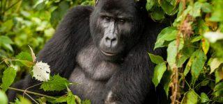 Virunga Tour packages & General information