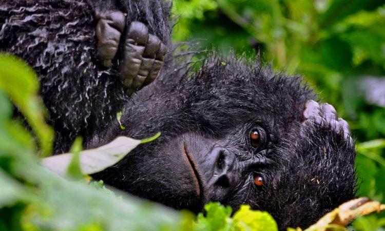Is it safe to visit Virunga National Park?