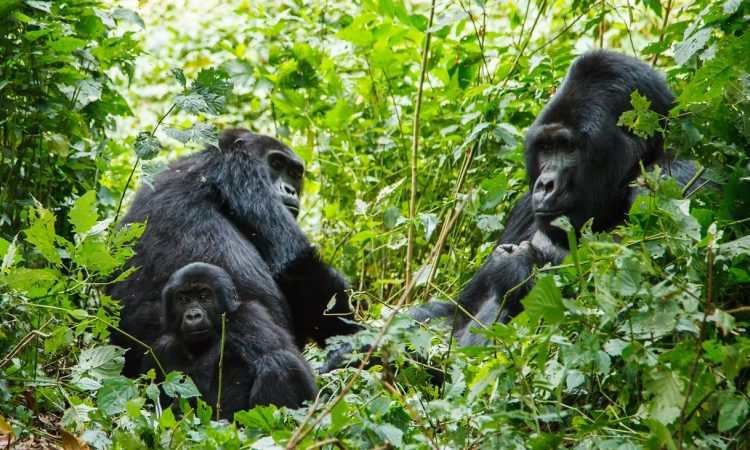 RwandaTravel Guide During COVID-19