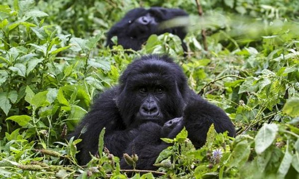 Top 4 Rwanda Safari Activities during COVID-19