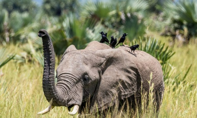 Uganda National Parks to look out for