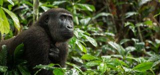 When to visit Kahuzi Biega National Park