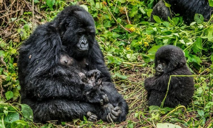 Post-Covid travel in the Virunga National Park